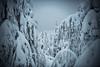 Desolation (tomi.a) Tags: finland kuusamo ruka valtavaara trees forest winter snow dark nature cold freezing landscape snowscape sky clouds flickr travel d850 desolate desolation desert white black