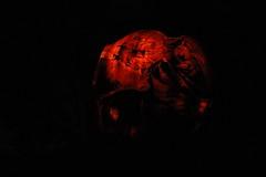 IMG_6661 (comtrag) Tags: jackolanterns rogerwilliamszoo rhodeisland halloween pumpkins pumpkincarving