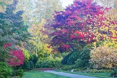Autumn at Hawthorne Park, V2 (ScarletBlack) Tags: autumn hawthornepark fallcolor hawthorneparksurrey fall fallleaves