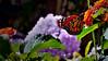 en el jardin (ojoadicto) Tags: mariposa butterfly garden flowers flores nature naturaleza artisticphotography color silly