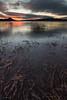 Empantanado (Unai Saenz) Tags: agua algas arbusto atardecer landa nubes paisaje pantano planta water landscape nature naturaleza swamp