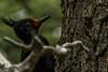 El Golpe (Edu Martin Cruz Photography) Tags: travel travelphotography chile argentina patagonia fauna birds animals animalphotography pajaros trekking tree