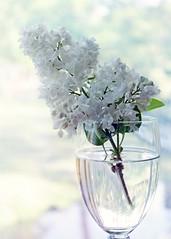 #كن شيئاً #جميل ،  فالجميل لا #ينسى (اللّهُمـَّ آرزُقنآ حُـسنَ ) Tags: ينسى كن جميل