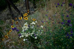 Dreaming of wildflower days (Jamie Kerr) Tags: focus beautiful pretty colours trees grass woods cabin clearwatercounty landscape explorealberta exploreab explore adventure scenery happyplace walk camping outdoors nature field wildflowers flowers canonrebelxti canon