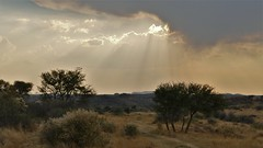 nach dem Regen.... (marionkaminski) Tags: namibia afrika africa landscape paysage pasaje wolken clouds nuages nubes sunset sky panasonic lumixfz1000 coucherdusoleil tree arbre arbol weg chemin way