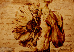altered: semblance (hoolia14oh4) Tags: altered collage art nude poppy botanical anatomy vintage distressed