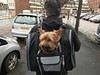 02 Jan 17 Me and Ted. (@daz_reynolds) Tags: ted dog yorkie carrier
