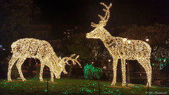 Lo Zoo che Vorrei (The Zoo I'd Want) (Mr. Bamboocha) Tags: 2017 cervi deers italia italy lozoochevorrei lucidartista lucidartista2017 salerno thezooidwant villacomunale it
