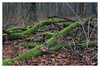 Im Wald (Peter L.98) Tags: projekt365 wald baumstamm moos natur laub blätter sonya6000