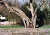 Heelsum Kerkweg Aan de Beek oude linde boom Foto ca 1973 Collectie Lies v d Broek van Galen (Historisch Genootschap Redichem) Tags: heelsum kerkweg aan de beek oude linde boom foto ca 1973 collectie lies v d broek van galen