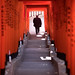 The+Torii+tunnel+-+Tokyo%2C+Japan+-+Color+street+photography