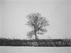 standing alone (ladybugdiscovery) Tags: bw tree lone stormy snowstorm blackandwhitephotos