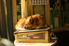 Le gardien (hans pohl) Tags: espagne andalousie cadix chiens dogs moments nature animals animaux