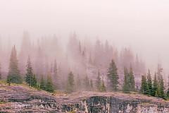 Foggy Kananaskis (HikingJoe-Gone too long) Tags: canada canadianrockies kananaskis fog atmosphere weather trees mountains landscape