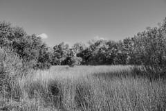 Cosumnes River Preserve Wetlands in monochrome (randyherring) Tags: ca california centralcaliforniavalley cosumnesriverpreserve elkgrove afternoon aquaticbird nature outdoor recreational waterfowl wetlands monochrome blackandwhite