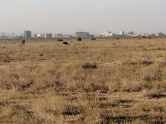 2017-12-28 17.45.14 (dcwpugh) Tags: travel nairobi kenya safari nairobinationalpark