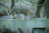 HFF and a robin (jillyspoon) Tags: hff robin canon canon70d canon70200 70200 niddgorge rspb