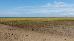 Seashore at Säärenperä (Siikajoki, 20170808) (RainoL) Tags: crainolampinen 2017 201708 20170808 august balticsea bothnianbay fin finland fz200 geo:lat=6490745812 geo:lon=2497999192 geotagged northernostrobothnia permeri pohjoispohjanmaa sea seascape seashore siikajoki summer säärenperä