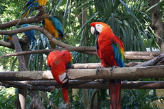 "Parrots • <a style=""font-size:0.8em;"" href=""http://www.flickr.com/photos/28558260@N04/38946898132/"" target=""_blank"">View on Flickr</a>"