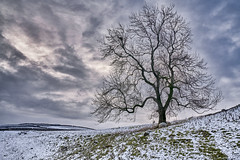 A tree in the snow... (Martyn Fordham LRPS) Tags: