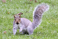 """squirnut • <a style=""""font-size:0.8em;"""" href=""""http://www.flickr.com/photos/157241634@N04/39080569882/"""" target=""""_blank"""">View on Flickr</a>"""