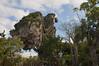 Pandora-The World of Avatar - Animal Kingdom (fisherbray) Tags: fisherbray usa unitedstates florida orangecounty orlando baylake disney waltdisneyworld wdw disneyworld animalkingdom themepark nikon d5000 pandora theworldofavatar avatar