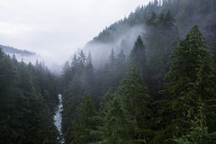 Allies (John Westrock) Tags: landscape nature trees river forest clouds morning cloudy overcast washingtonstate pacificnorthwest carbonado canoneos5dmarkiii canonef2470mmf28lusm