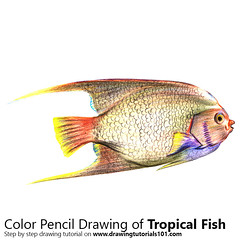 Tropical Fish with Color Pencils [Time Lapse] (drawingtutorials101.com) Tags: tropical fish fishes animal animals sketch sketches pencil sketching draw drawing drawings color colors coloring how timelapse video time lapse speed