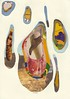 Frolic (Capybailey) Tags: frolic collage analog cutandpaste handmade handcut vintage paper original playboy geode