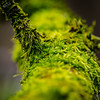 "BOKEH ""Macro Mondays"" (MAICN) Tags: bokeh moos ast macromondays makro mossy 2017 macro macromonday square green quadratisch grün branch mm"