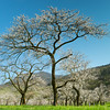 Spring... (Walter Quirtmair) Tags: ifttt 500px sky spring blue tree grass green austria orchard blossom apricot blooming wachau quirtmair