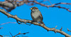 1 (msalatrab) Tags: bird tree animals wildlife beauty nature arabphotogrpher mustafa elattrib libyan arab عصفور طير طائر حيوانات حياة برية مصطفى الأترب الاترب مصور ليبي