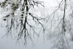 surface II (notpushkin) Tags: winter pond teich water surface mirror reflection trees grey grau