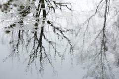 surface II (notpushkin) Tags: winter pond teich water surface mirror reflection trees grey grau