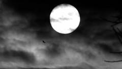 [ .      FLIGHT    . ].raw.pbm.png (ǝlɐǝq ˙M ʍǝɥʇʇɐW) Tags: fd solar planetary body science dark sky cloudy bird flight drift sun breeze goth vision darktexassky texas up aliceoftheair musicjohncoltrane blacktexassky shift fly darkcloudfilter filter wind gusts antarcticdreams oneiricsky iceparticles theair light atmosfrafysik physics atmosphere attenuation scattering lordrayleigh electromagnetic radiation uv ir euv wavelength invalidtag terminator border day night ὄρνισ thebirds ornithologia hitchcock melaniedaniels tippihedren amnesicshellfishpoisoning capitola daphnedumaurier electroacousticmixturtrautonium herrmann anxietysexualpowerandtheviolenceofnature camillepaglia anapocalypticpoem oiseau vögel 鳥 птиц ptice fugler ptáků 새 thetronalofiscienceobservatory solarimagery mrtrona