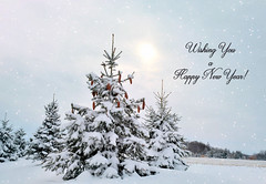 Happy New Year! (tonnycdl) Tags: snow trees evergreen winter pinecones