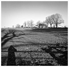Shadows and Trees. (Tony Joness) Tags: analogue analog bw bnw blackandwhite blackwhite camera develop developer dxophotolab epson epsonscanner england film hp5plus hp5 harrogate ilfordhp5plus ilford monochrome mono mediumformat rodinal rollfilm scanner scan square trees tree uk v550 yorkshire zeissikonikonta52316 zeiss 6x6 niddgorge