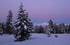 Happy New Year, 2018! (windyhill623) Tags: beltofvenus sunset twilight meadow snow winter newyear mountain dusk tree forest eastkootenay britishcolumbia sky purple outdoor landscape