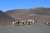 In cammello sul Timanfaya (manuelfanciullacci) Tags: canarie isola timanfaya vulcano cammello lanzarote spagna europa nikond5100