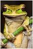 New Granada Cross-banded Treefrog or Masked Treefrog / Rana Enmascarada (Panama Birds & Wildlife Photos) Tags: amphibian amphibians animal anfibios anfibio wildlife wildlifephotography wild wildlifephotographer wildanimal animalpic animales animals nature naturephotography naturaleza natura naturepic naturephoto treefrog frog frogs rana ranaarborícola ranas macro macrophotography macrowildlife ngc