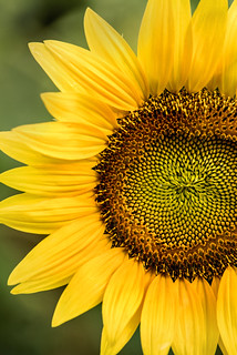 Part of a Sunflower 3-0 F LR 7-22-17 J048