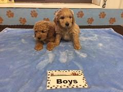 Roxie Boys pic 4 12-10