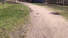 Deer Lake Park, Burnaby, BC. Canada (GO®D WEISFLO©K) Tags: deerlakepark burnaby bccanada gordweisflock weisflock geese deerlake