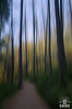follow the path (Images from the Shire) Tags: forest trees ethereal scotland artwork