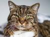 Goodnight sweet boy (judi may) Tags: podge cat handsome mydearsweetboy heartbroken