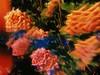 alarde (meeeeeeeeeel) Tags: rosas warmtones colorido colorful colors fauxvintage roses surreal glassfilter filters flowers iphone iphoneography hujicam hujiapp huji