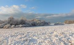 Winterlandschaft (Wunderlich, Olga) Tags: schnee bäume sträucher rügen insel mecklenburgvorpommern landschaft natur landschaftsfoto naturaufnahme inselrügen