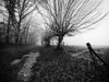 Campagne picarde III (steph20_2) Tags: panasonic lumix gh3 714 m43 paysage campagne countryside picardie oise monochrome monochrom hiver winter noir noiretblanc ngc blanc black bw white skanchelli