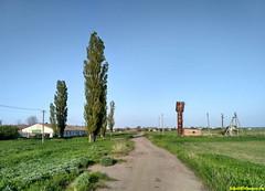 """Растут """"кипарисы"""", зеленеет трава, а дороги пустынны!"""