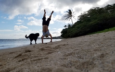 Man Handstands on beach with black dog next to him as wave roll on to shore (Eric Broder Van Dyke) Tags: samsung oahu 2017 man handstands beach with black dog next him wave roll shore
